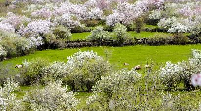 【H3 有杏遇见你】<伊犁吐尔根杏花沟·赛里木湖·那拉提·奎屯·库木塔格沙漠·吐鲁番·天池>双飞8天