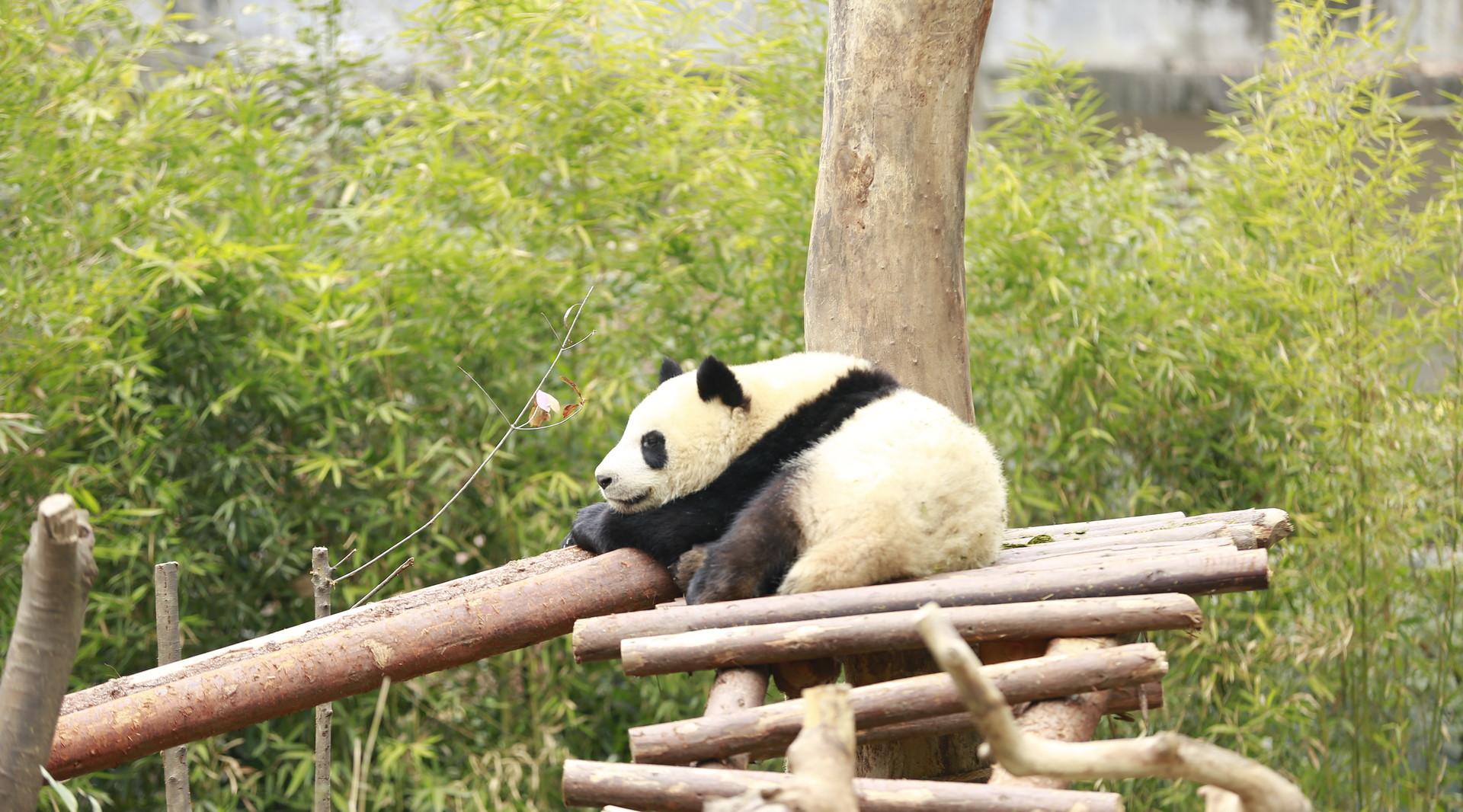 【保姆车九五至尊】<成都-九寨沟-牟尼沟-熊猫乐园-宽窄巷子双飞6日游>