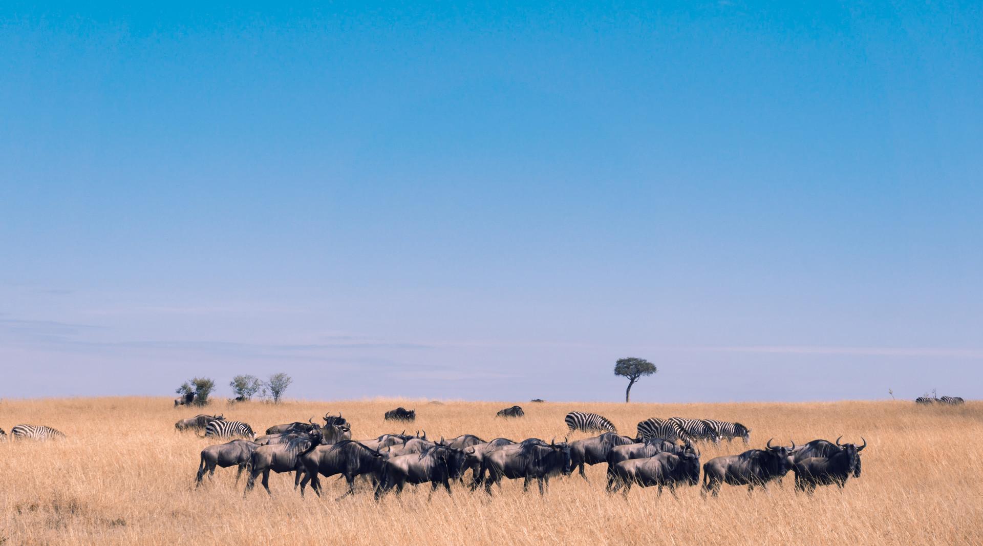 【精品小团】<肯尼亚狂野7天游>广州往返直飞 追寻野生动物踪迹